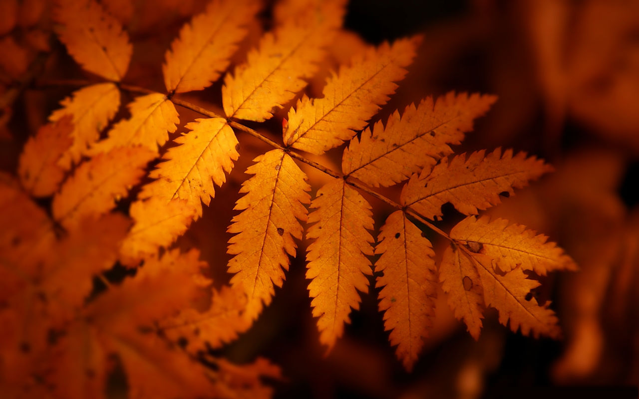 Labels Red Autumn Leaves Photography Hd Wallpapers For