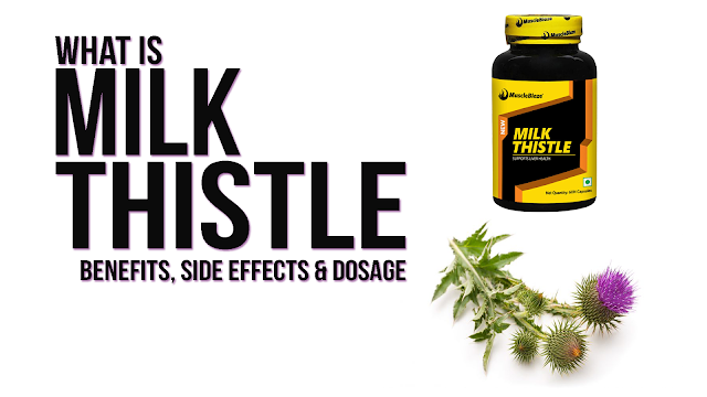 Learn all about Milk Thistle and its Use in Bodybuilding