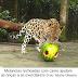 Cuidados  com animais e plantas no Zoobotânico do Goeldi