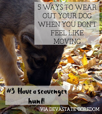 I wish I had known these when Kaylee was a puppy!  SO smart, and easy.  #3- Have a scavenger hunt! - 5 simple, minimal-effort ways to exercise your dogs when It's raining, hot out, or you're sick / pregnant / just freaking tired!  How to entertain a puppy without exhausting yourself in the process...