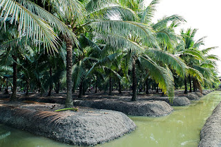industri kelapa muda thailand yang maju