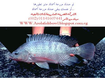 ازولا واحواض سمكيه