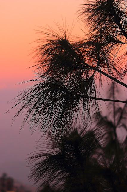 Sunset from Tree House Inn