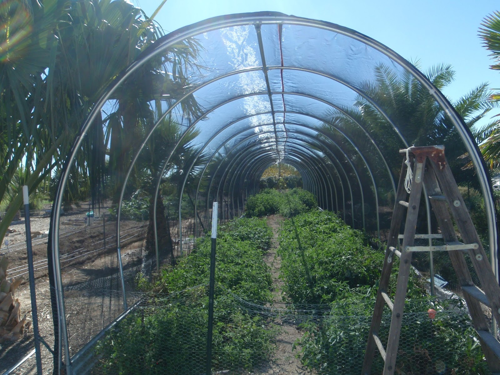 This Is 30% Shade. Leafy Green Vegetables And Herbs Grown For Their Leaves  Will Benefit From Shade Cloth When Grown Under Intense Sunlight In The  Desert