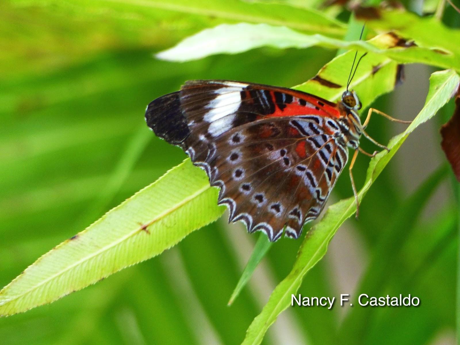 rainforests castaldo nancy f