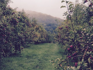 Apple picking at Stribling Orchard