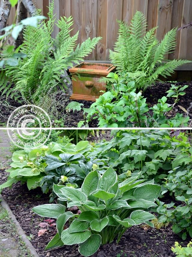 Wie aus einem wilden Hinterhof ein kleiner Garten wurde
