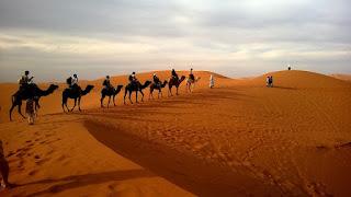 kamieļu safari dubaijā