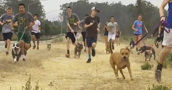 High School Cross-Country Team Takes Lonely Shelter Dogs On Their Morning Runs