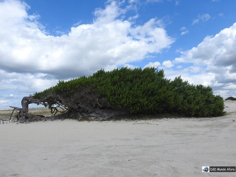 Diário de Bordo - Árvore da Preguiça - Jericoacoara - Ceará