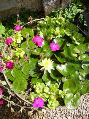 Chaque Jour Ecoute Une Fleur Aout 2011
