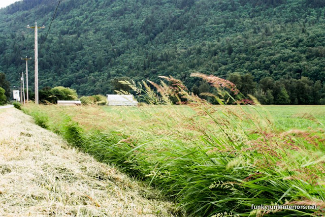 farmland tall grass beside road
