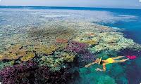 барьерный риф фото