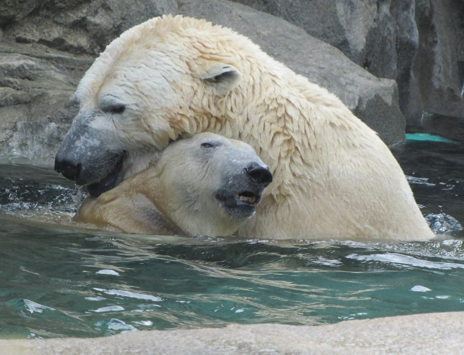 Little One and Anana My Polar Bear