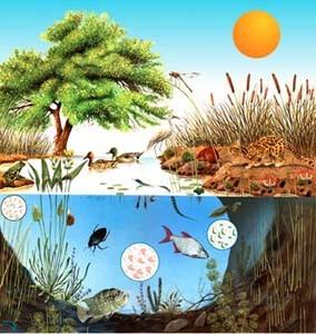 Ecosistemas Acuáticos Y Terrestres Actividades Didactalia