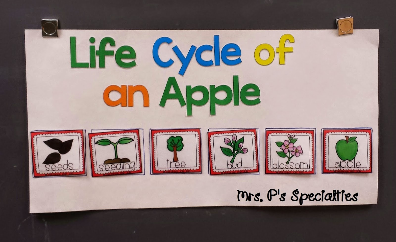 photo of the life cycle of an apple poster