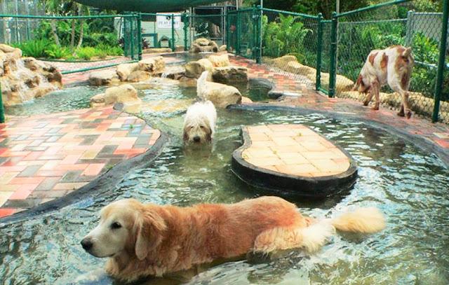 Top Dog Pet Resort Reviews