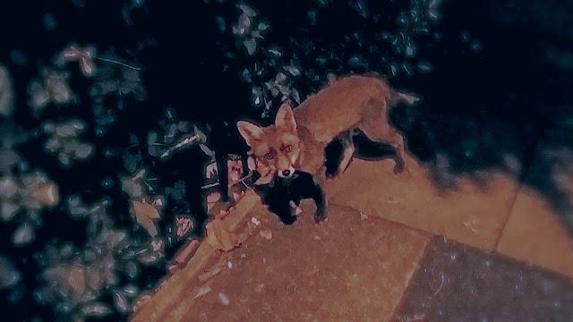 baby fox london