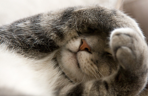 How Cats Body Language Shows Their Health Condition