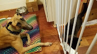 dog lying on a dog bed next to a gate while a cat stands on the other side of gate