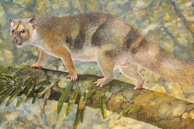 New tiny species of extinct Australian marsupial lion discovered