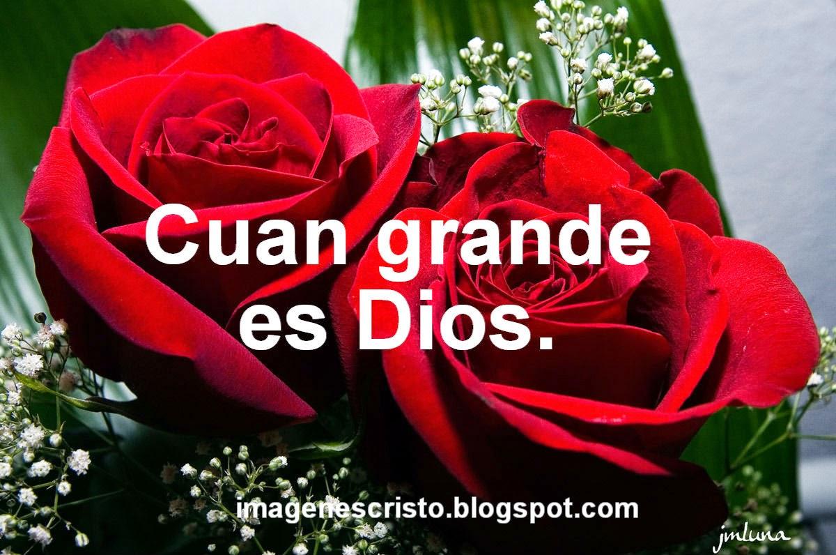 Descargar Imagenes De Rosas Con Frases