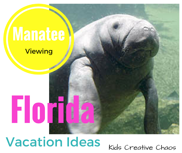 See Manatees in Florida Vacation Ideas