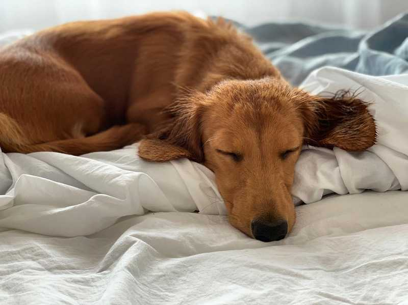 Giardia in Dogs: Symptoms, Causes, & Treatments