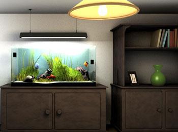 Làm sao để chọn nơi đặt bể cá?