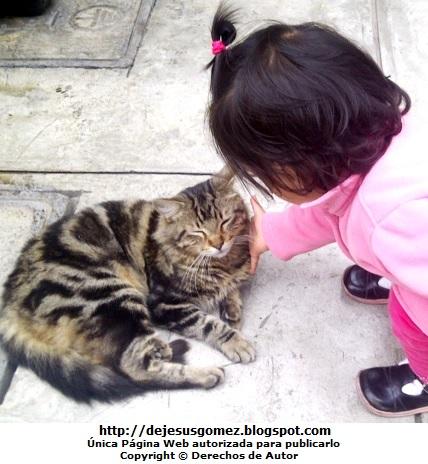 Foto de un gato siendo acariciado por una pequeña por Jesus Gómez