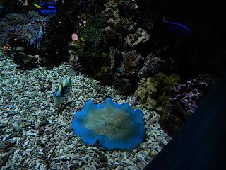 リヴォルノ水族館のイソギンチャク