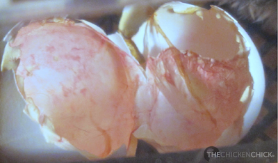 Eggshells & membranes from a newly hatched chick.