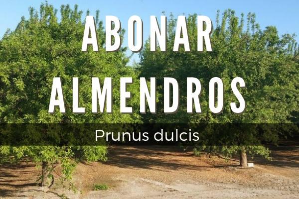 Abonar almendros, Prunus dulcis, para lograr las mejores cosecha