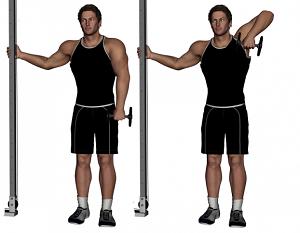 Single-Arm Dumbbell Upright Row