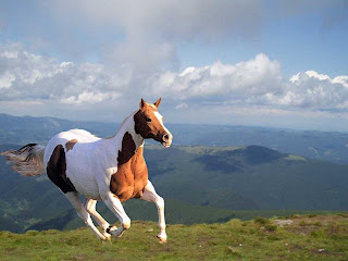 Picturessss Best Collection Of Horses