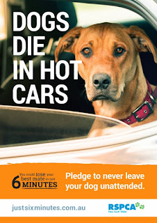 RSPCA-Dogs-die-in-hot-cars