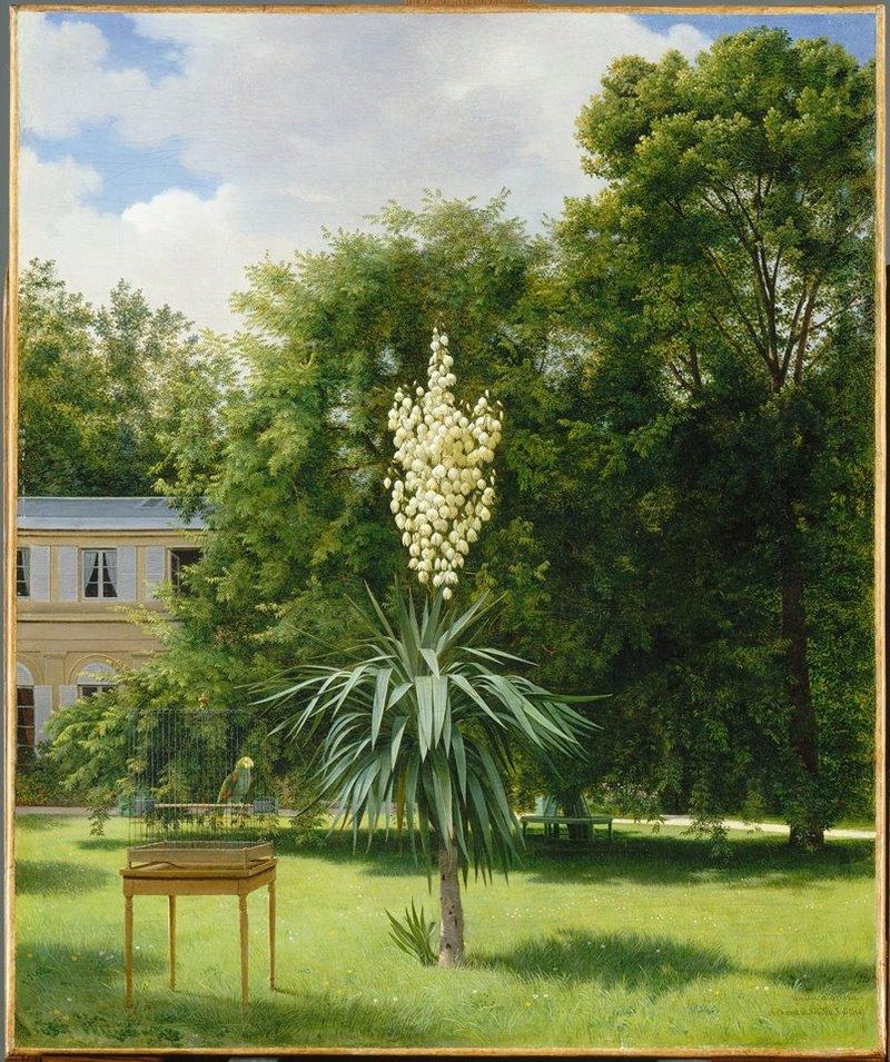 Antoine Chazal, 1793-1854. Un Yucca gloriosa dans le parc de Neuill
