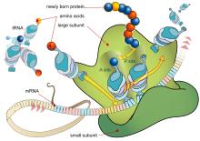 Blog Riyawan Protein