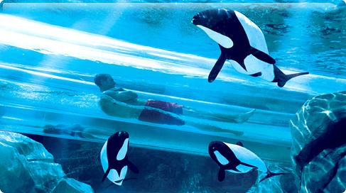 Aquatica Orlando Parque Dolphin Plunge