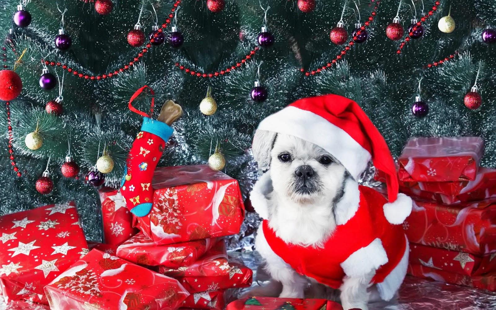 Hond met kerstmuts bij de kerstboom