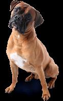 Cachorro  png