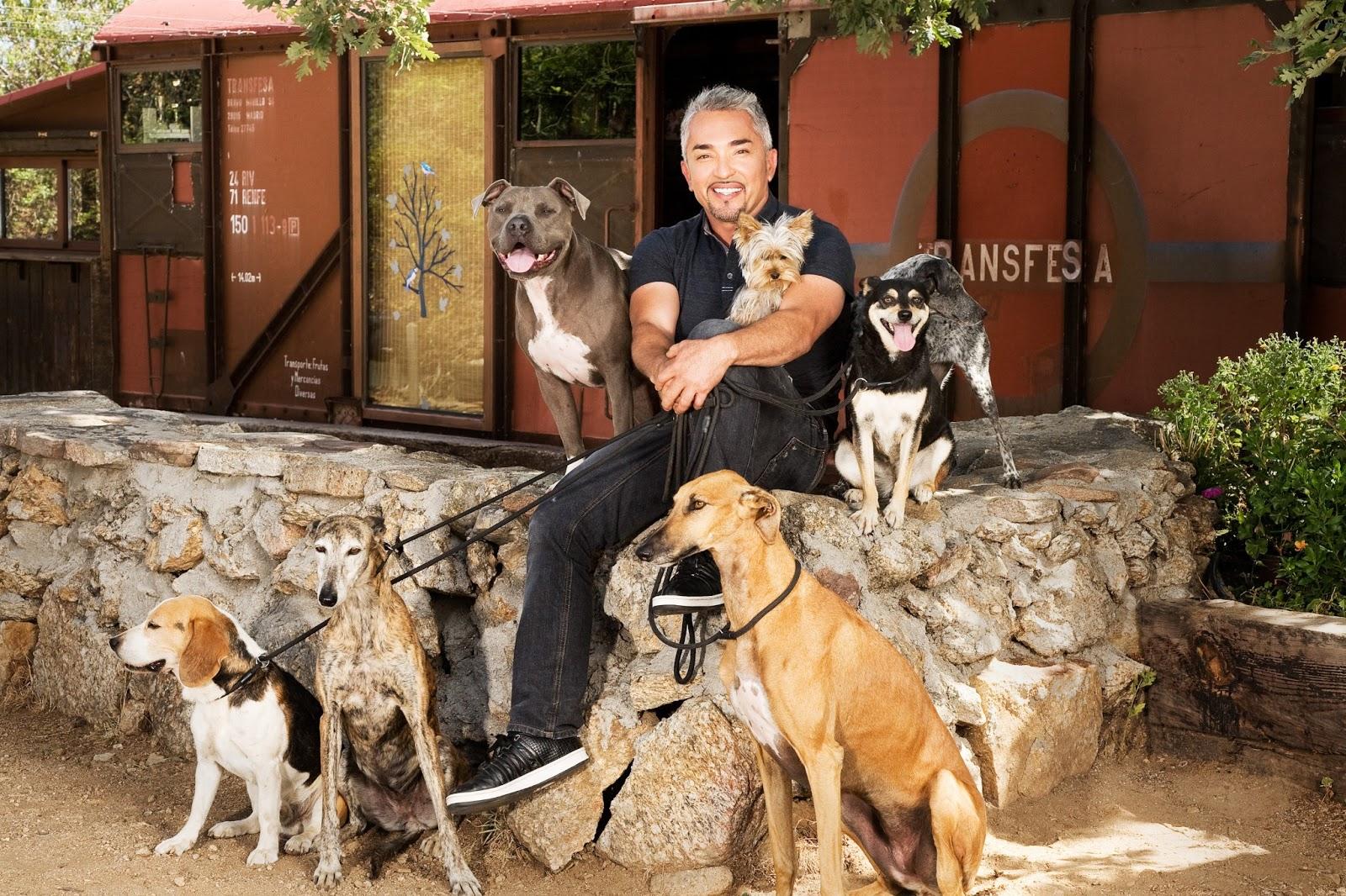 Cesar Millan, hundehvisker, hundeekspert, canal digital, national geographic, hunde, dog, opdragelse, dyr