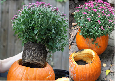 What to Do With Your Leftover Pumpkins