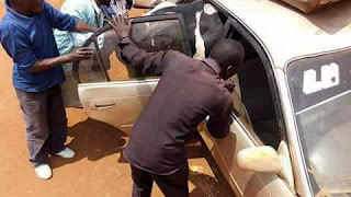 Men forcing   A  big Cow Into A Small CAR