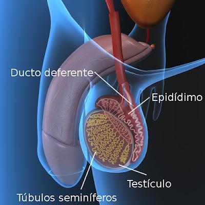 Natas e unguentos de higiene de um pênis