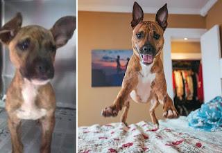 Antes y después perros adoptados de la calle