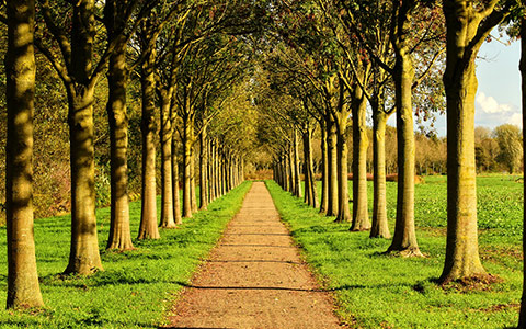 Tree planting spacing for growth and health by species