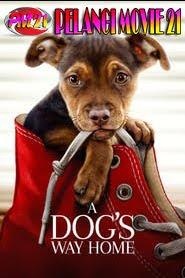 A-Dog's-Way-Home