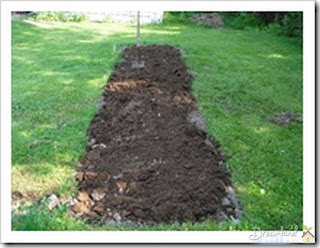 Dug some peat moss into our little veggie garden