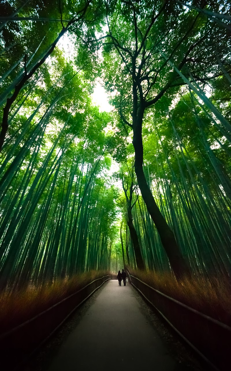 The Famous Bamboo Forest of Sagano, Japan